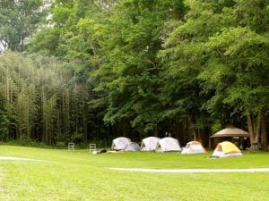6 tents on the grass at Pigeon River Campground.