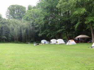 Tents on the grass at Pigeon River Campground.