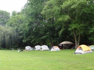 A row of tents on the grass at Pigeon River Campground in the Smoky Mountains.