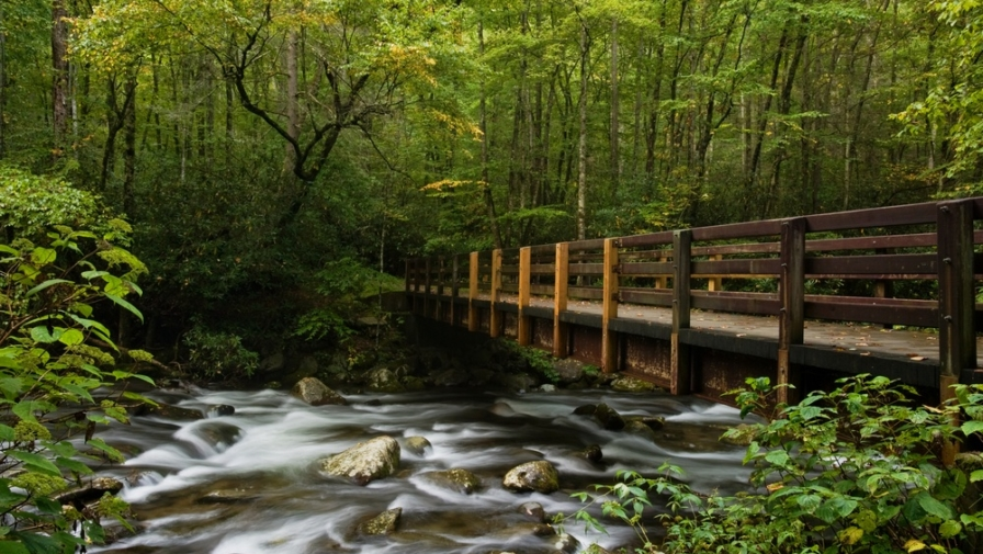The 6 Best Family Activities to do While Camping in the Smoky Mountains