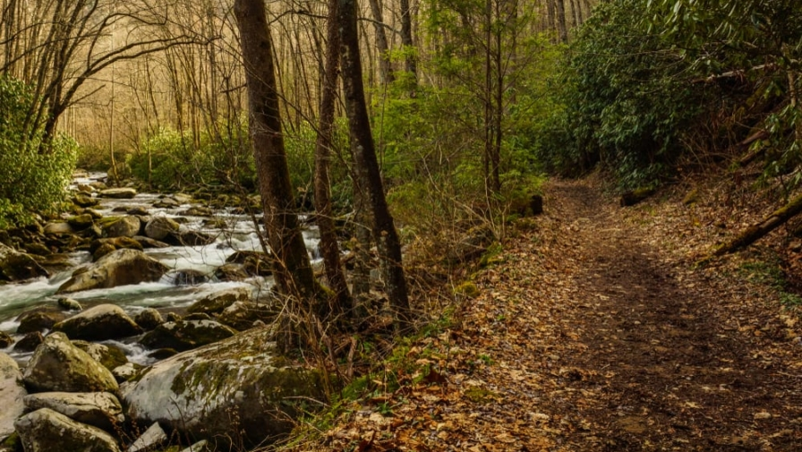 5 Hiking Trails in the Smoky Mountains Near Our Campground